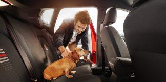 Σκύλος SEAT έρευνα ασφάλεια